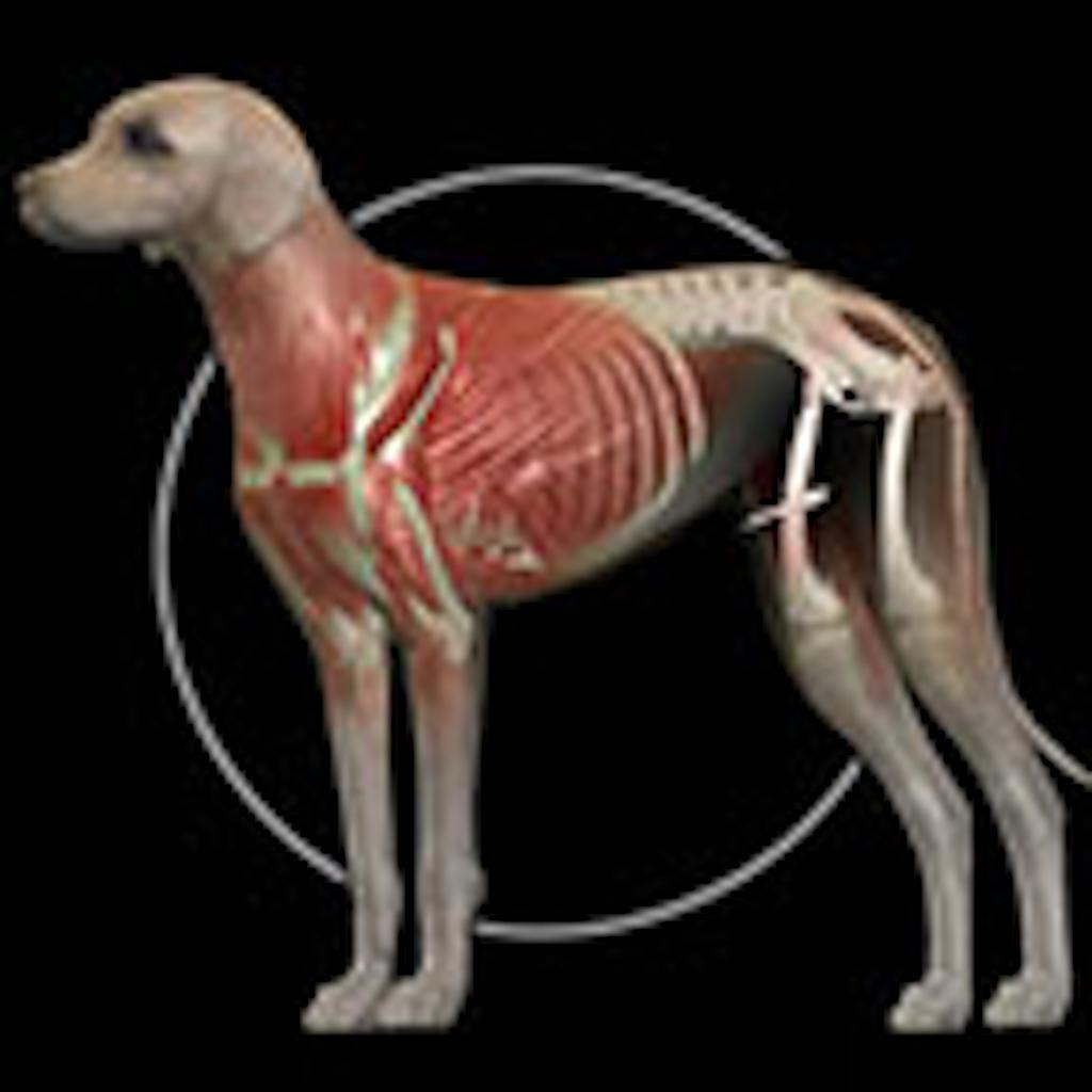 Dog Anatomy: Canine 3D - GetApplr